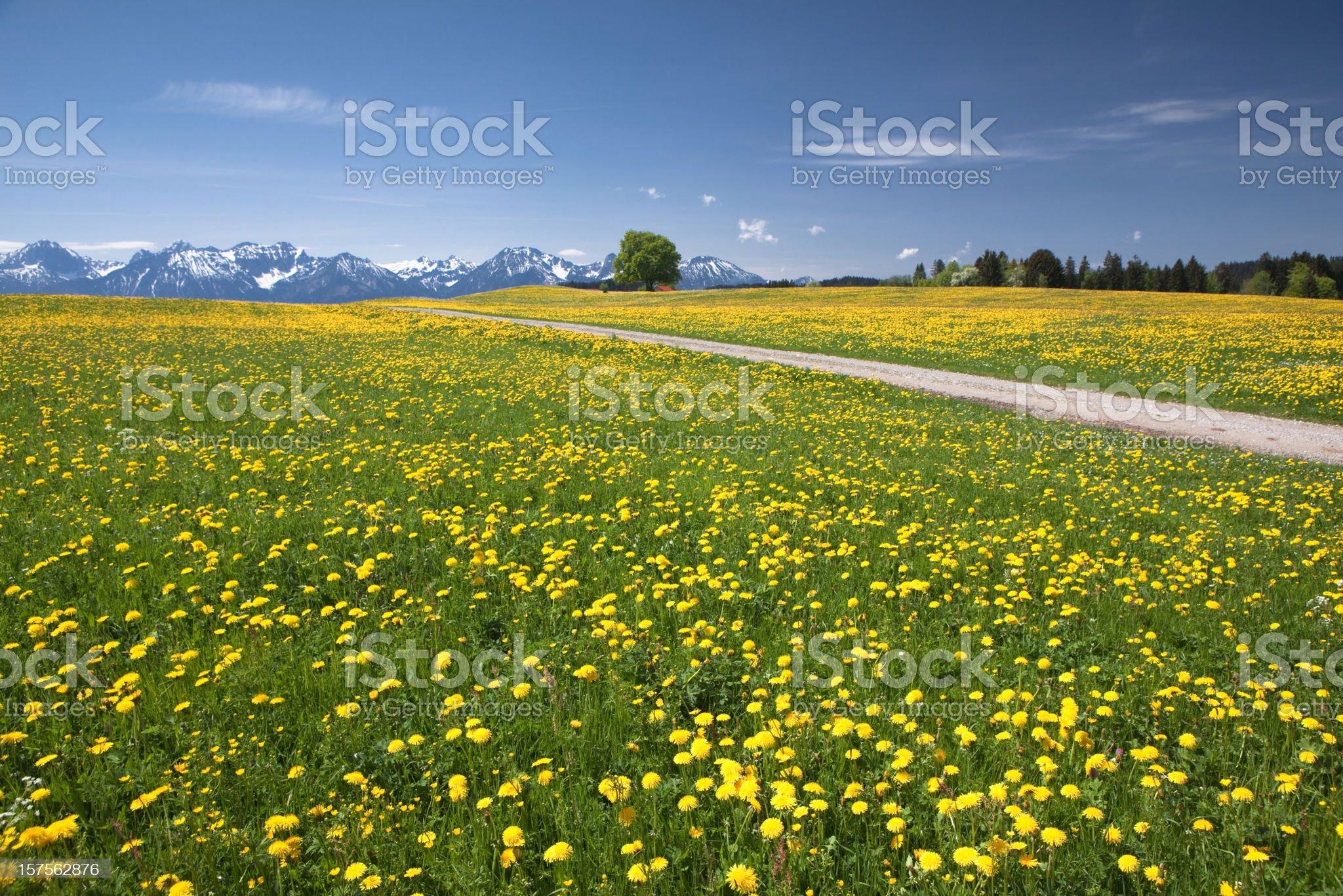bavarian spring meadow royalty-free stock photo