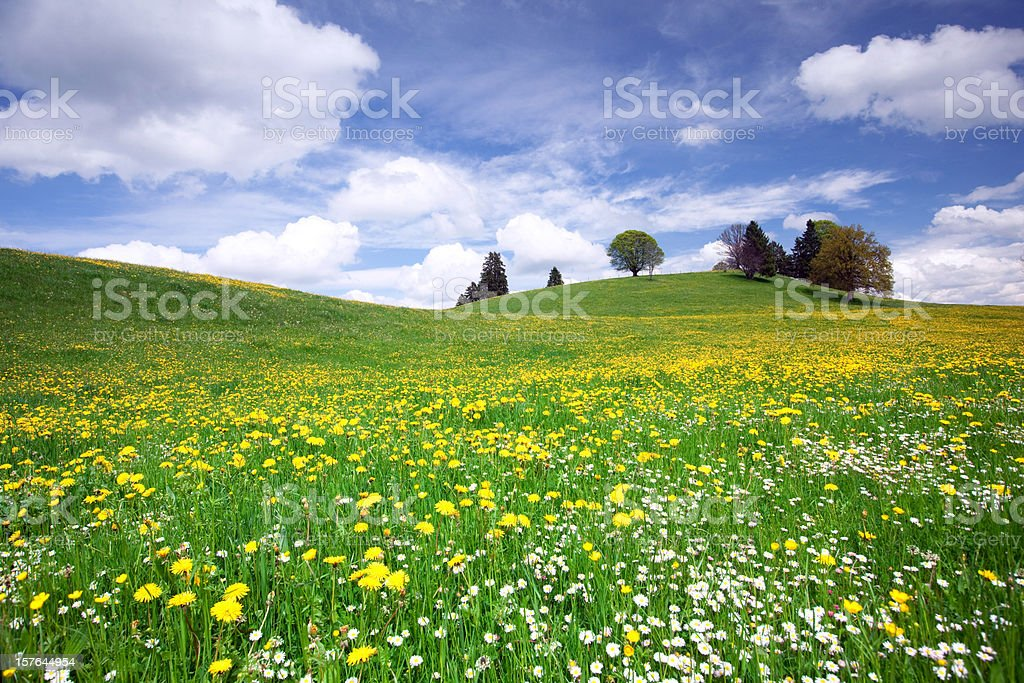 bavarian spring meadow stock photo