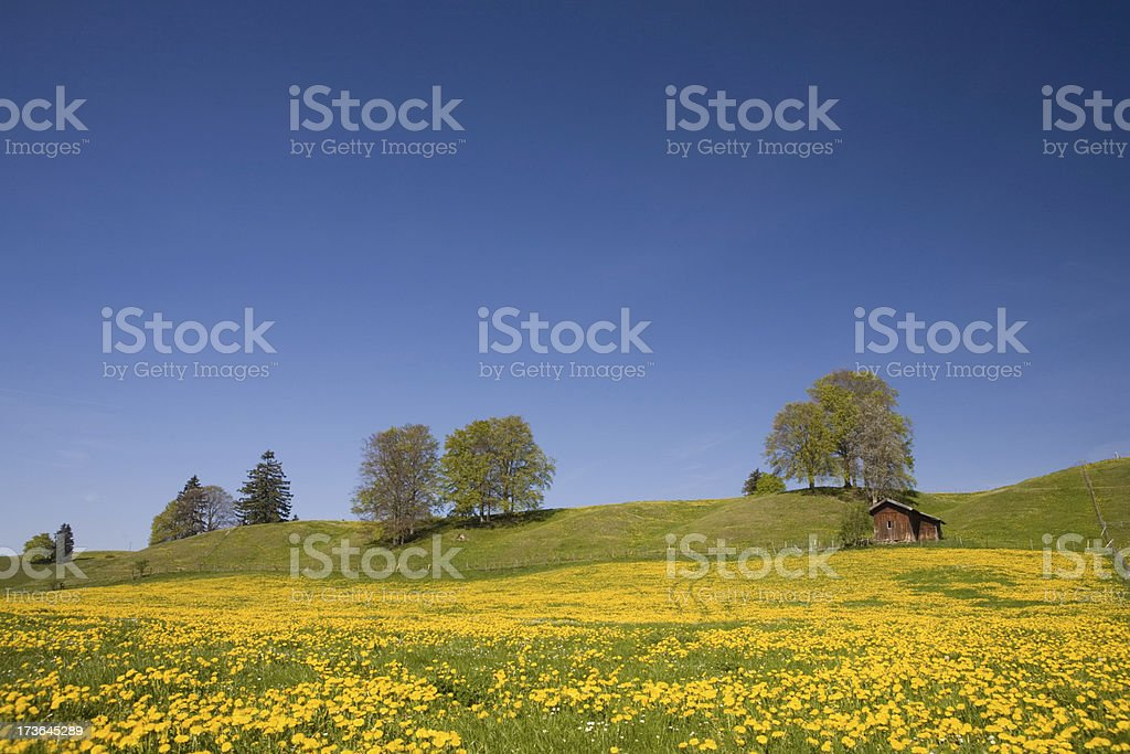bavarian spring meadow stock photo