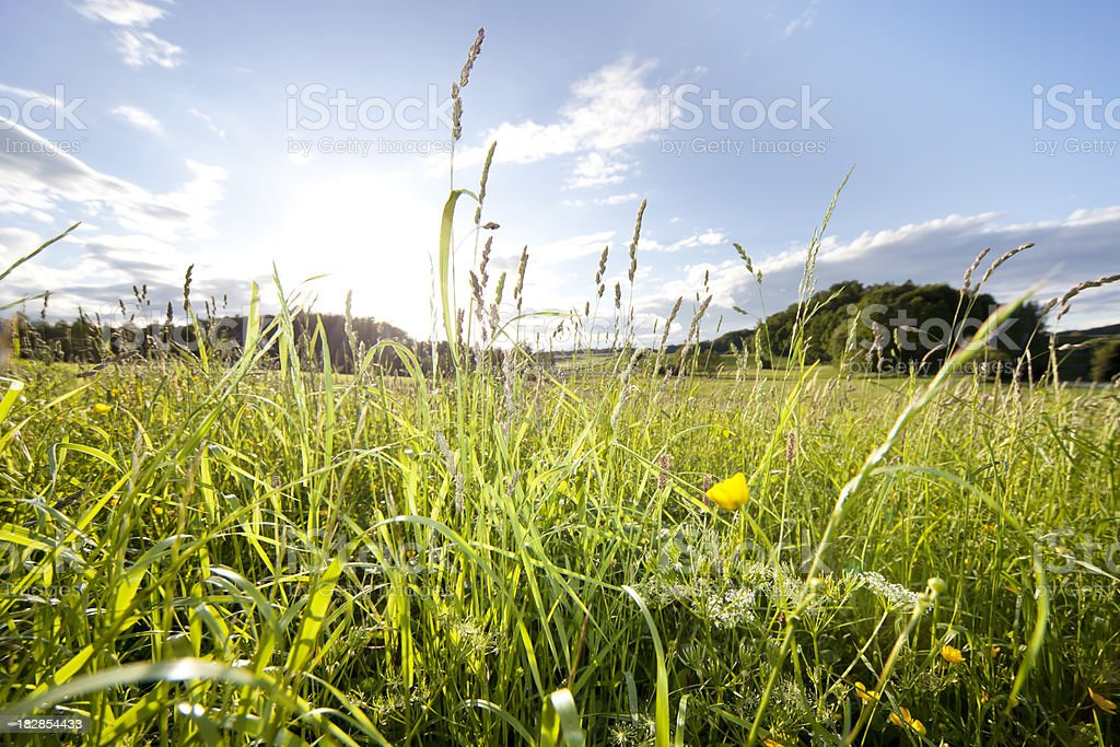 bavarian spring medow against the sky royalty-free stock photo