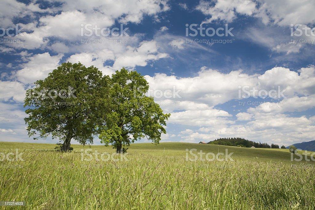 bavarian summer meadow royalty-free stock photo