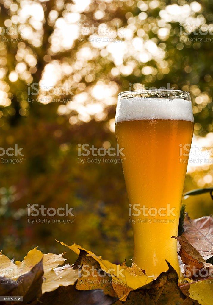 bavarian weissbier between autumnal leaves stock photo