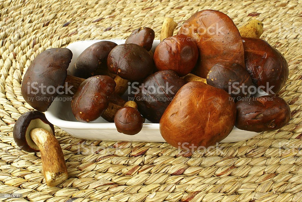 Bay boletes stock photo