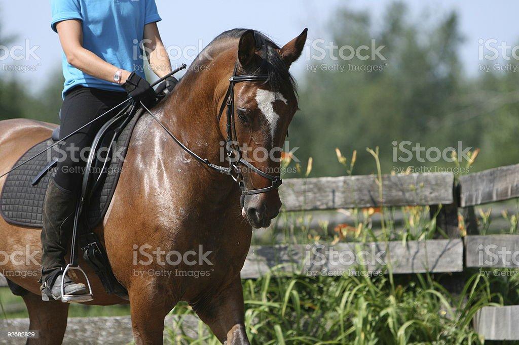 Bay horse and rider... stock photo