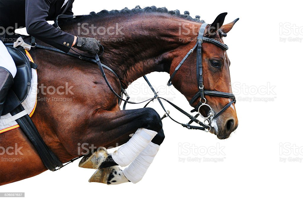 Bay horse in jumping show, isolated stock photo