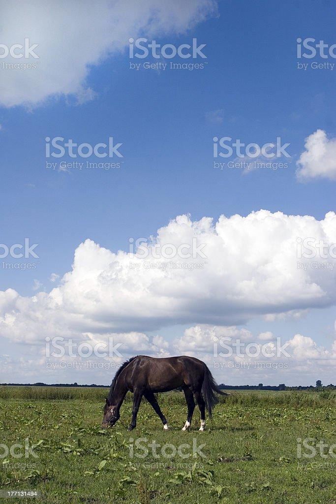 bay horse stock photo