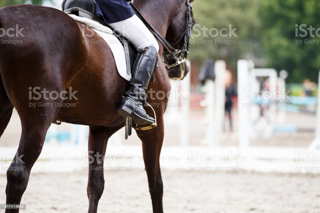 Bay horse with rider at dressage competitions stock photo