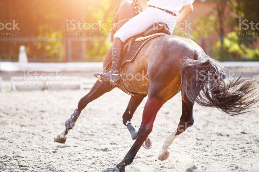 Bay horse with rider on show jumping competition. stock photo