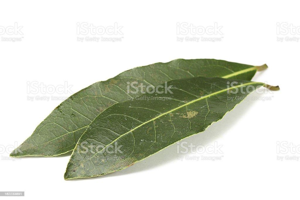 bay laurel leaves (laurus nobilis) isolated on white royalty-free stock photo