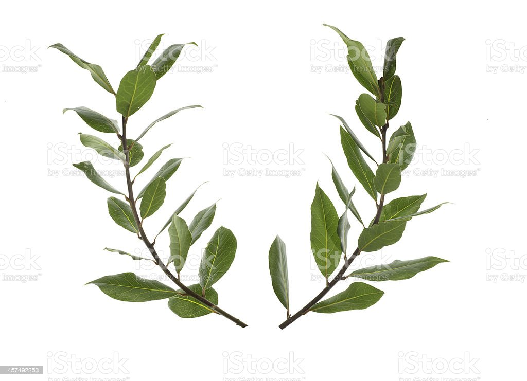 Bay laurel stock photo