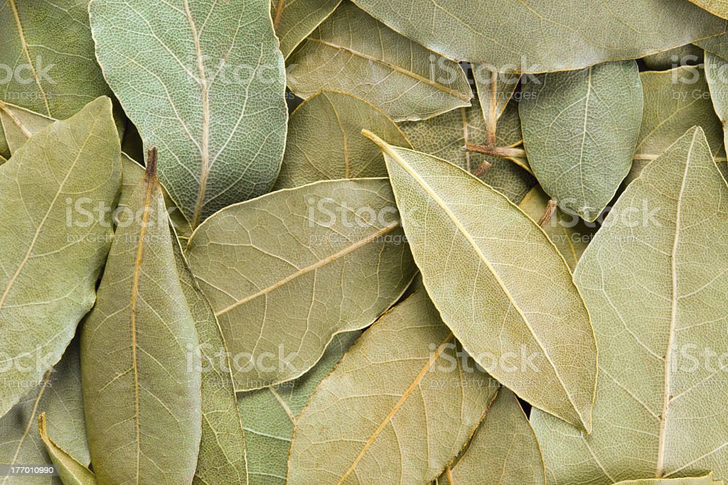Bay Leaves background. stock photo