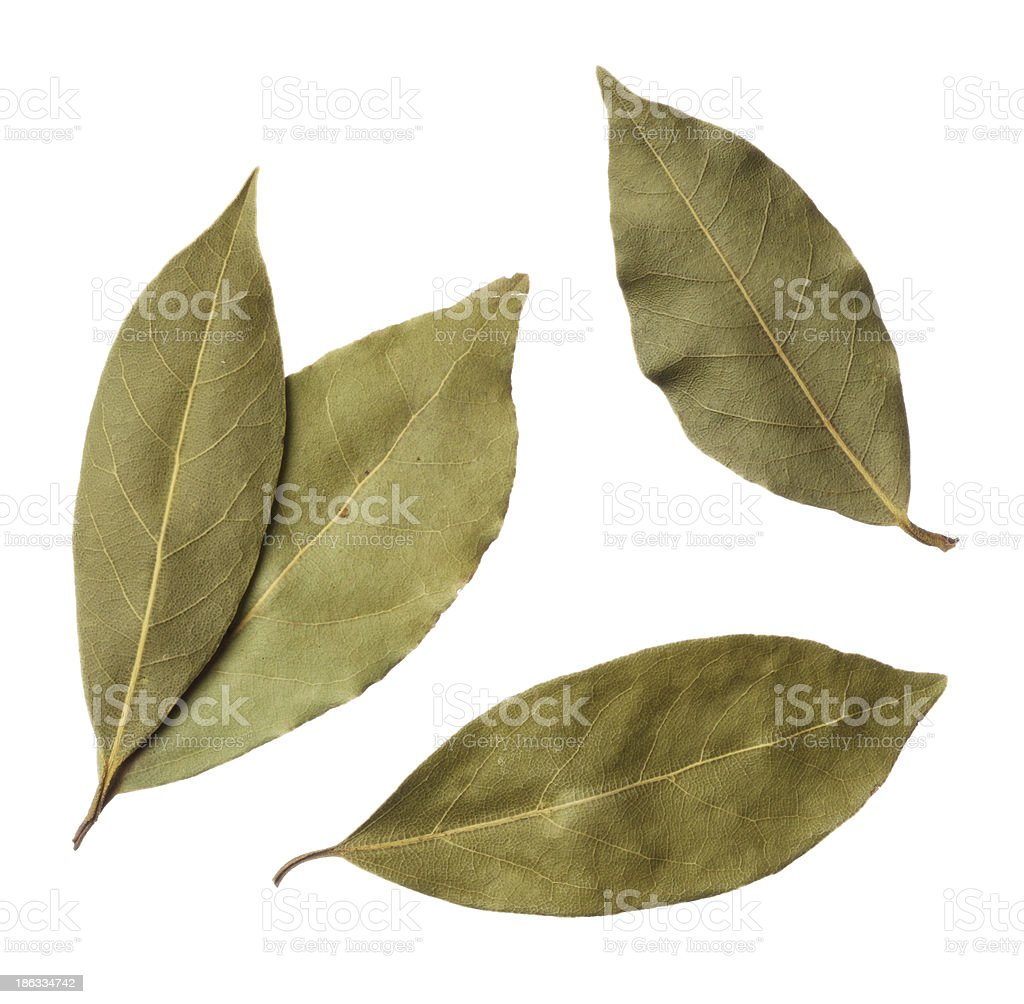 Bay leaves isolated on white background stock photo
