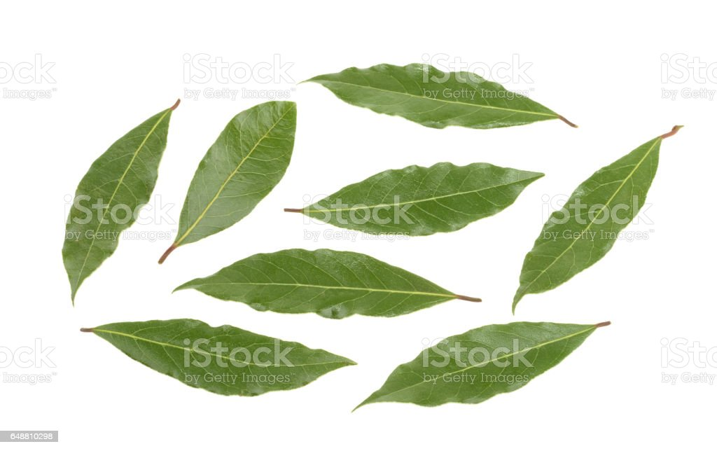 bay leaves isolated without shadow. set stock photo