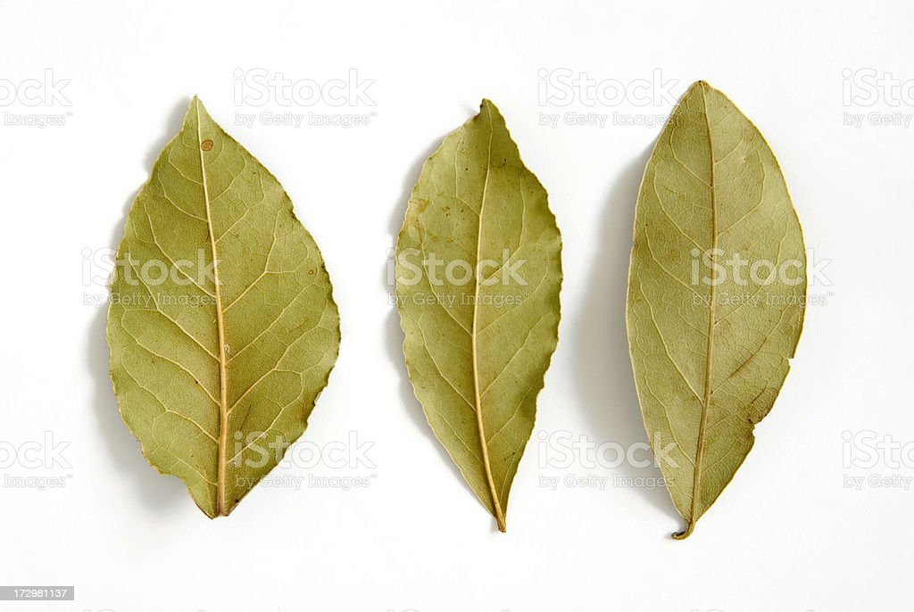 Bay Leaves (Laurus nobilis) on White royalty-free stock photo