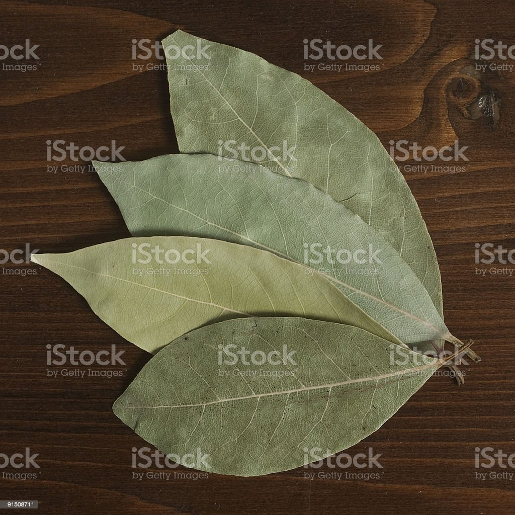 Bay leaves. royalty-free stock photo