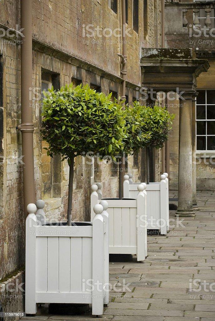 Bay trees at Dryham stock photo