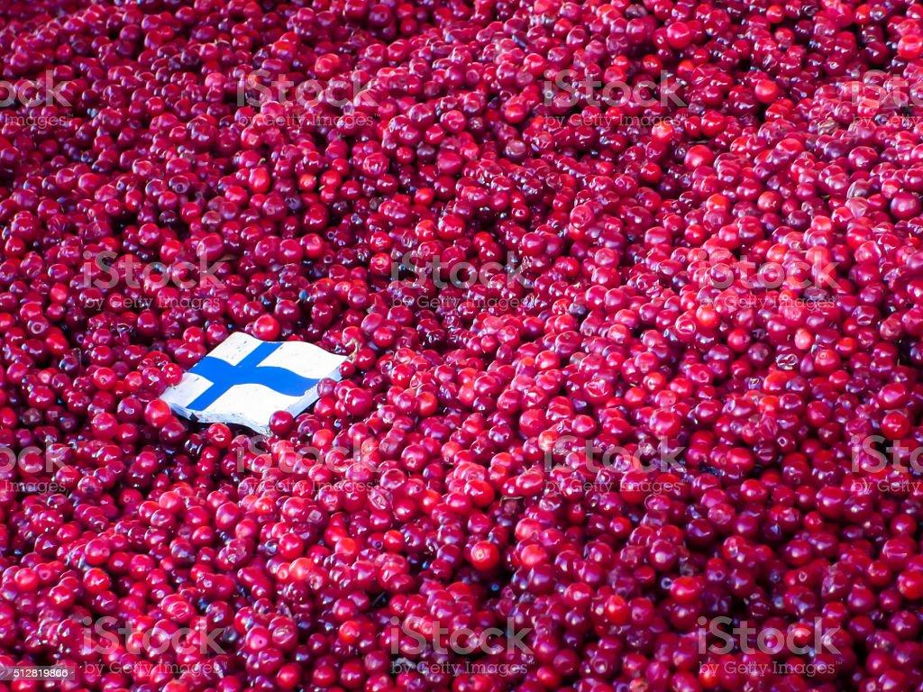 Baya finlandesa stock photo