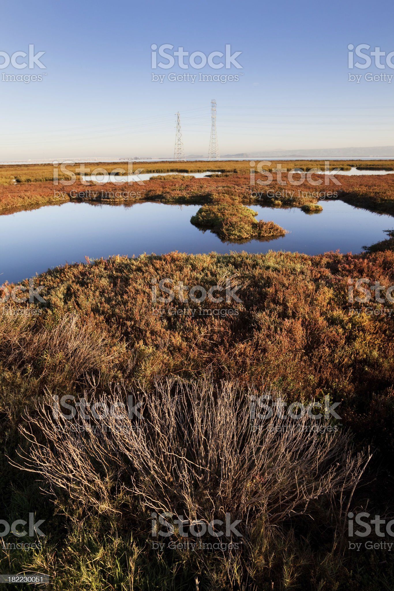 Baylands Park Early Morning Landscape  in California royalty-free stock photo