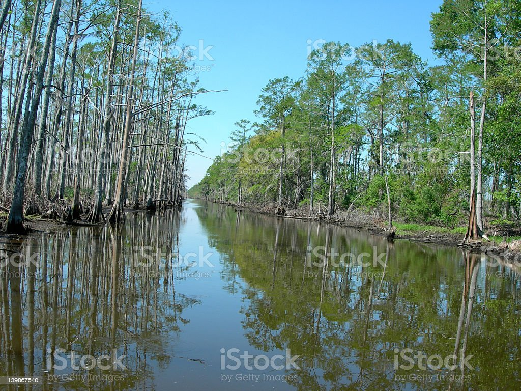 Bayou Swamp royalty-free stock photo