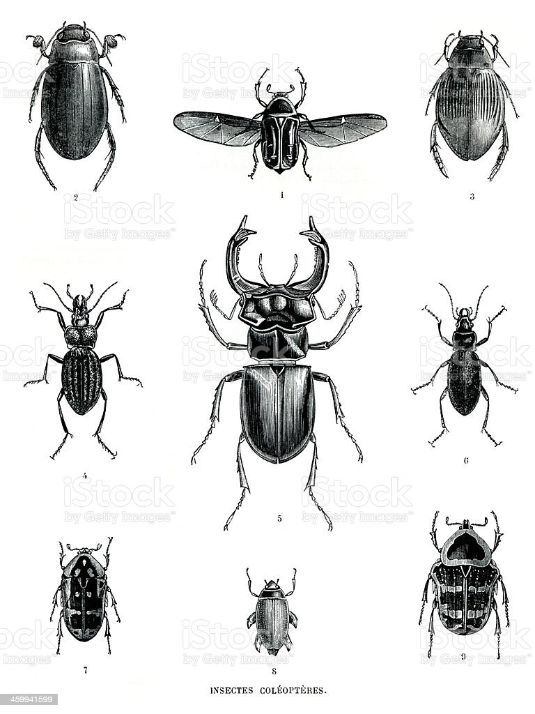 Bbook plates: Insects stock photo