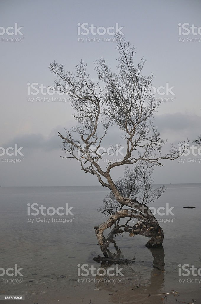 be lonesome royalty-free stock photo