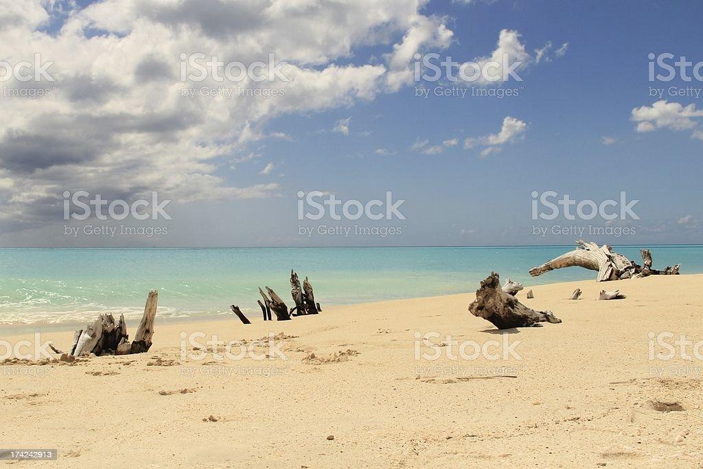 Beach and driftwoord stock photo
