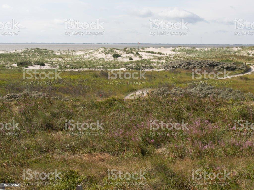 beach and dunes stock photo