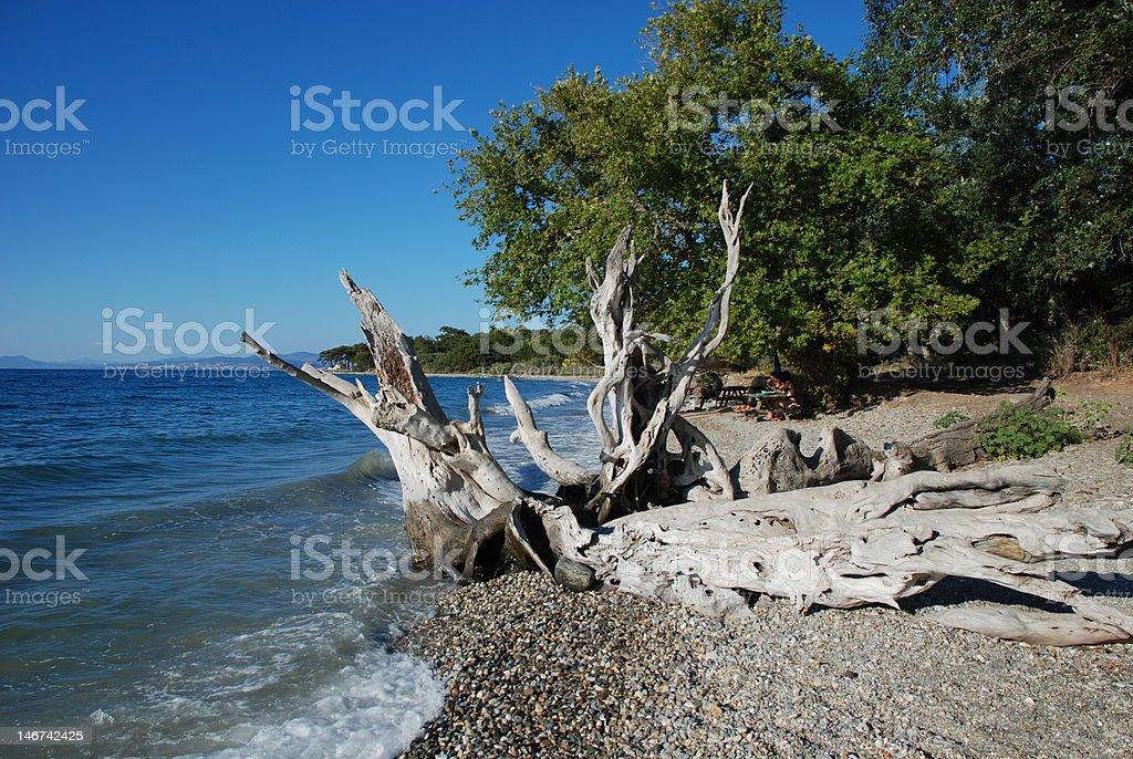 Strand und den Wald Lizenzfreies stock-foto