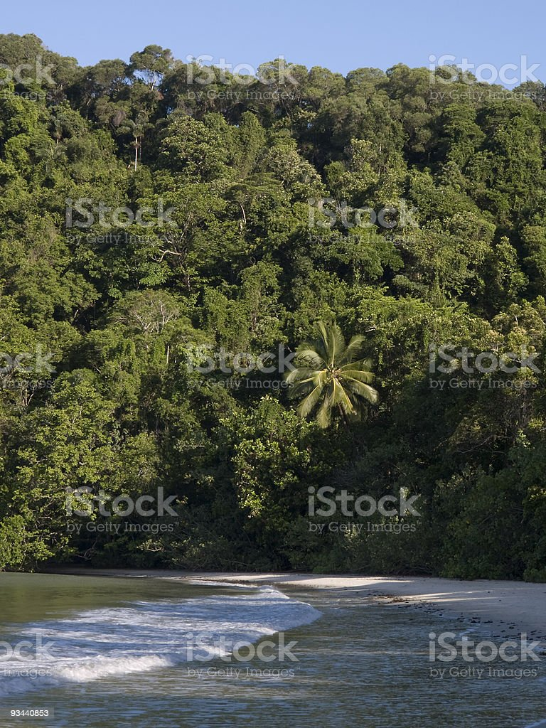 Beach and forest stock photo