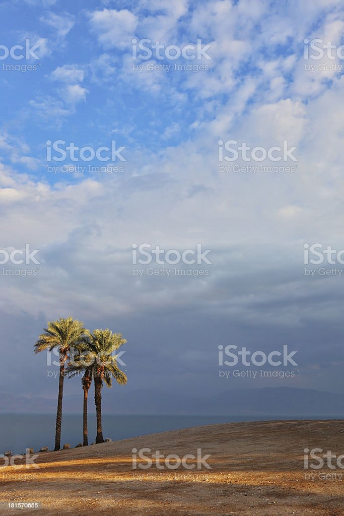 beach and palm trees on the  Dead Sea royalty-free stock photo