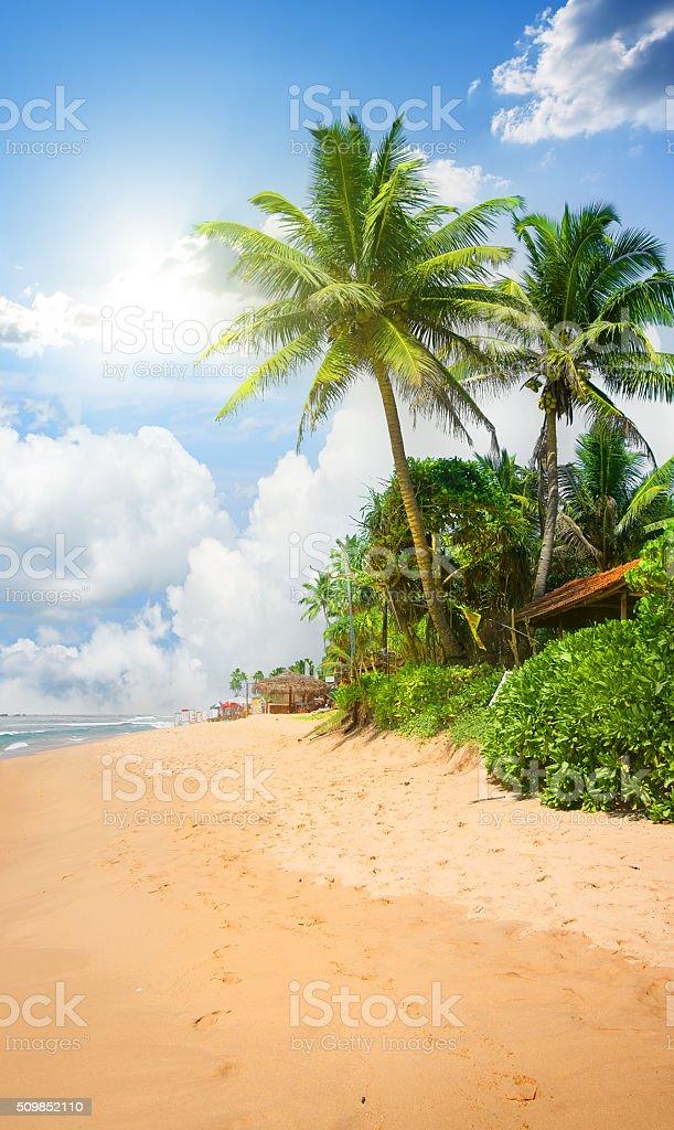 Beach and palms stock photo