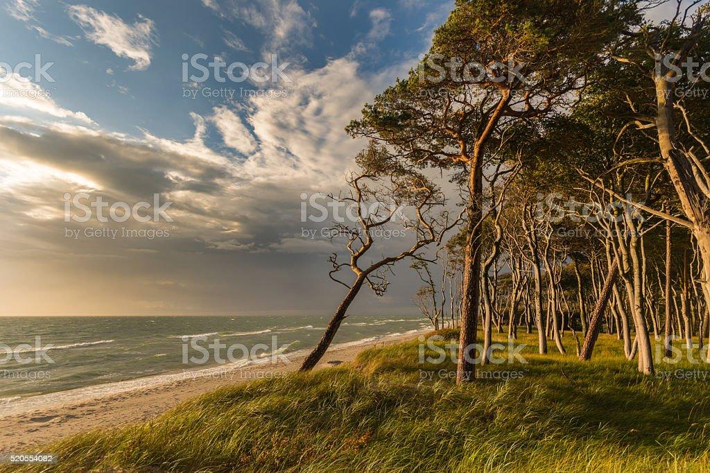 Beach at Ahrenshoop, Germany, Mecklenburg Vorpommern stock photo