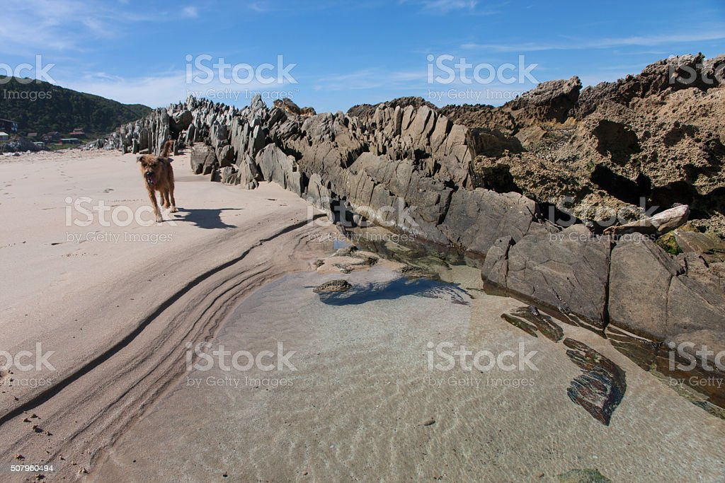 Beach at Eersterivier with terrier running on the sand stock photo