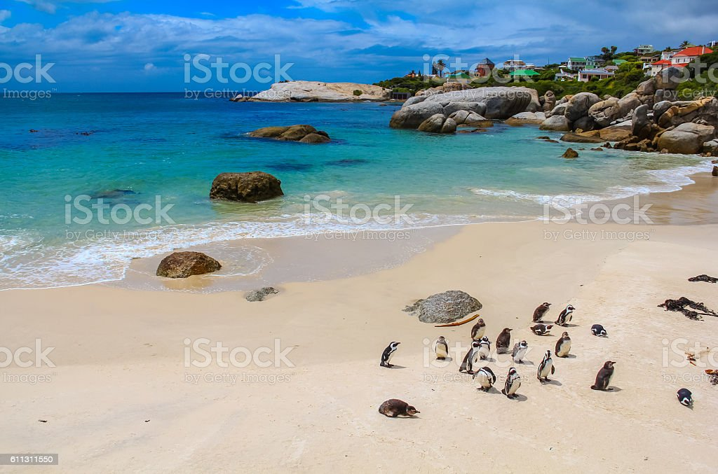 Beach at Simons Town stock photo