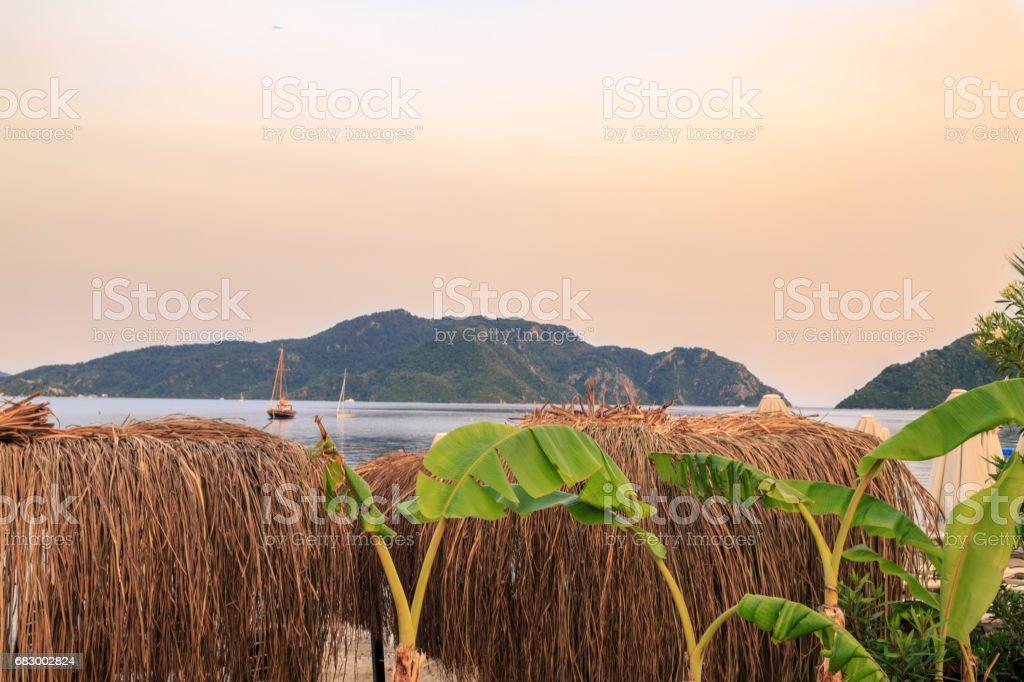 Beach bast sunshades with banana trees during sunset stock photo