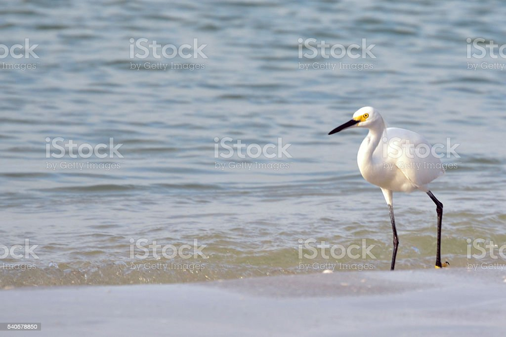 Beach Bird stock photo