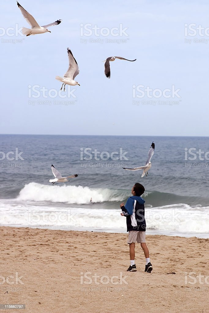 Beach Boy and Birds royalty-free stock photo