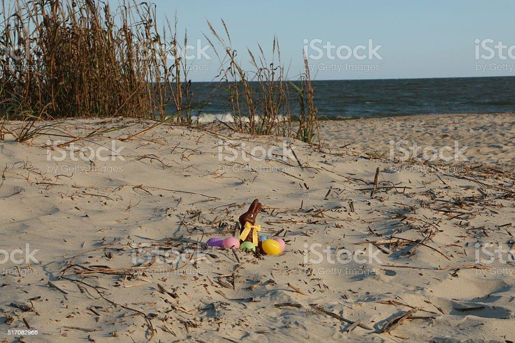 Beach Bunny stock photo