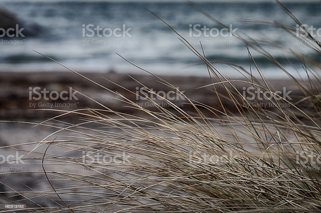 beach bush stock photo