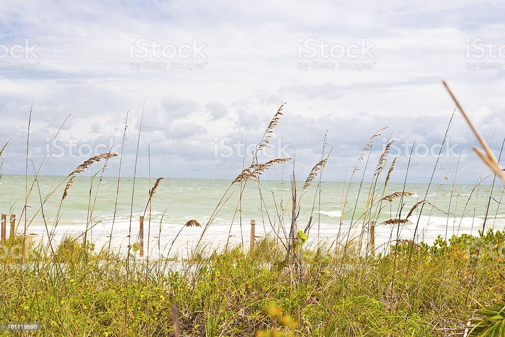 Beach Conservation royalty-free stock photo