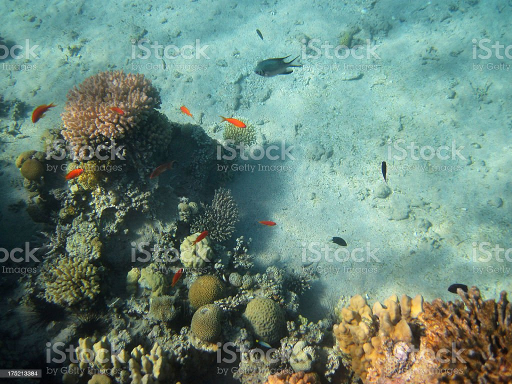 Beach coral reef royalty-free stock photo