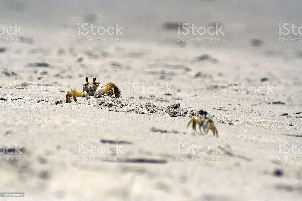 Beach Crabs stock photo