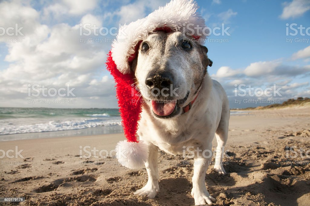 Beach Dog Christmas stock photo