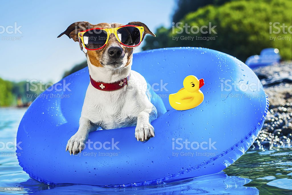 beach dog stock photo