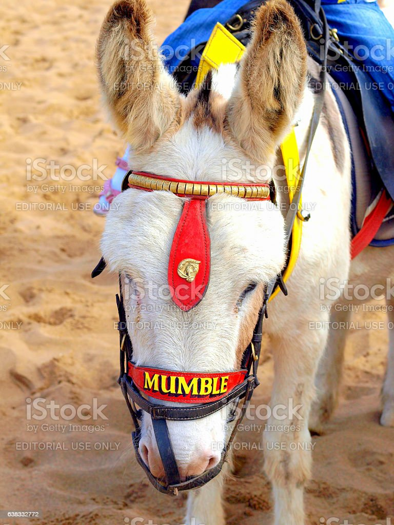 Beach Donkey, Skegness. stock photo