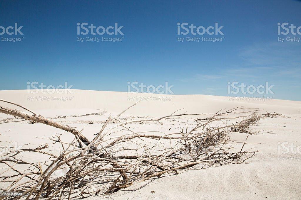 Beach dune scene stock photo