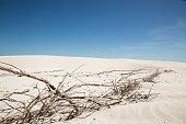 Beach dune scene