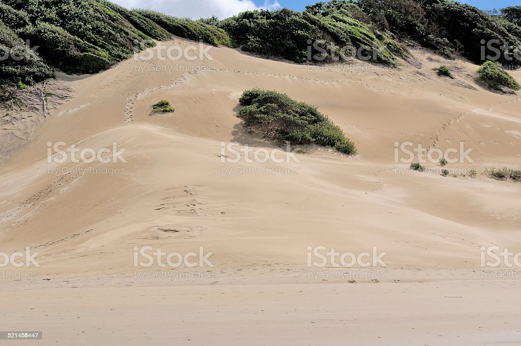 Beach dunes at East London South Africa stock photo