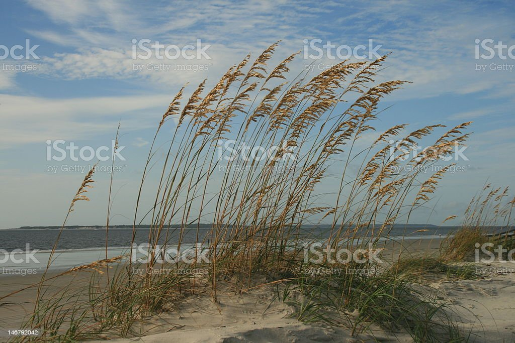 Beach Dunes royalty-free stock photo