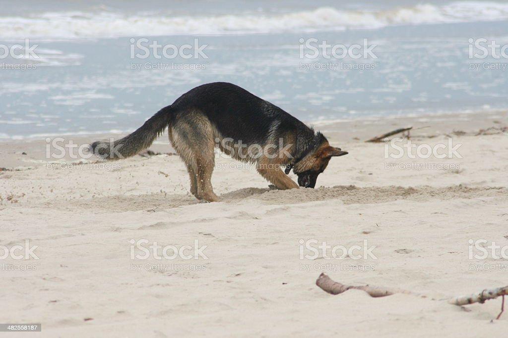 Beach excavation stock photo